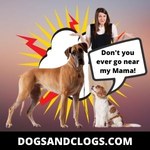Your Dog Is Protective Of You