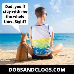 Your Dog Is Suffering From Separation Anxiety