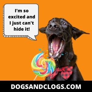 Your Dog Is Too Excited