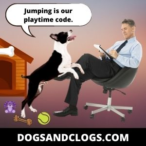Your Dog Jumps As An Invitation To Play