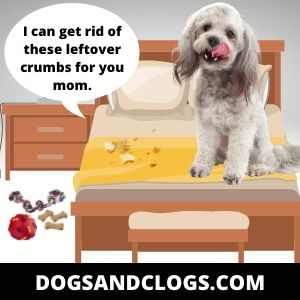 Your Dog Licks The Leftover Crumbs On Your Bed