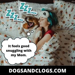 Your Dog Loves Snuggling With You