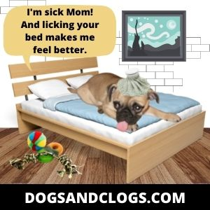 Your Dog May Have Medical Issues
