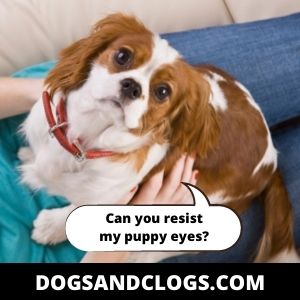 Your Dog Needs Something From You