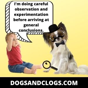 Your Dog Observes You Closely