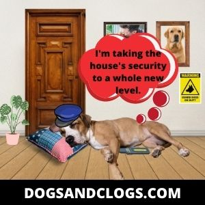 Your Dog Sleeps By The Door To Protect You
