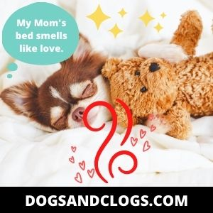 Your Dog Sleeps In Your Spot Because It's Saturated With Your Scent