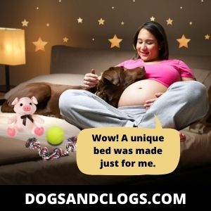 Your Dog Sleeps On Your Stomach Due To Over Attachment