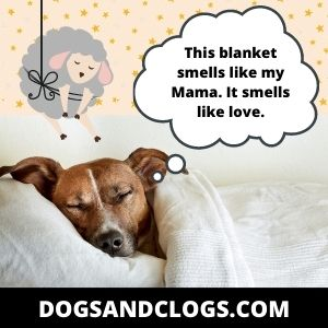 Your Dog Sleeps Under The Covers Because It Smells Just Like You