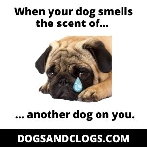 Your Dog Sniffs Your Clothes Due To An Unfamiliar Scent Meme