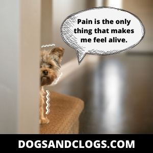 Your Dog's Acting Scared Because He's In Pain