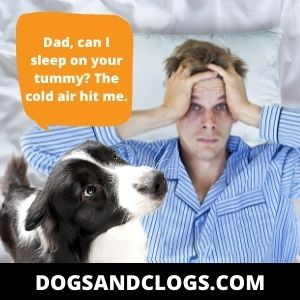 Your Dog's Trying To Warm Up With Your Body Heat