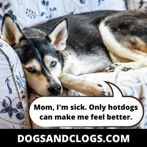 Your Husky Might Be Suffering From An Illness