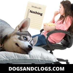 Your Personality Affects Your Husky's Laziness