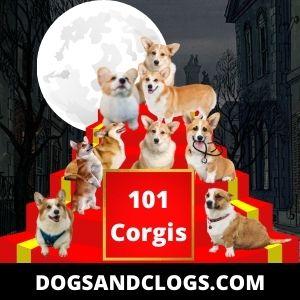 101 Corgis