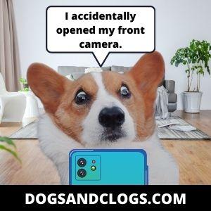 Corgi Accidentally Opened Front Camera
