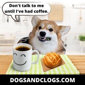 Corgi Meme Coffee