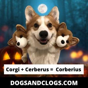 Corgi Meme Corberius
