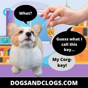 Corgi Meme Corg Key