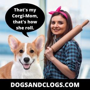 Corgi Meme Corgi Mom