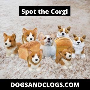 Corgi Meme Spot The Corgi