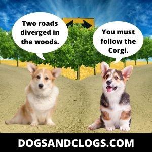 Corgi Meme You Must Follow The Corgi