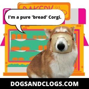 Corgi Pure Bread