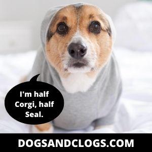 Corgi Seal