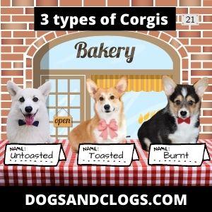 Corgi Types