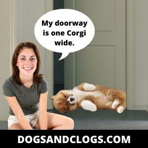 Corgi Wide Doorway