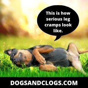 Dog Leg Cramps