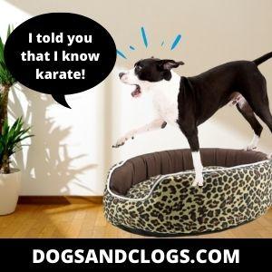 Dogs Have Startle Reflex
