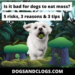 Is It Bad For Dogs To Eat Moss