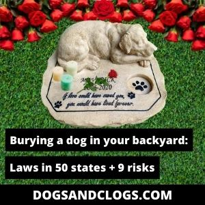 Is It Legal To Bury Your Dog In Your Backyard