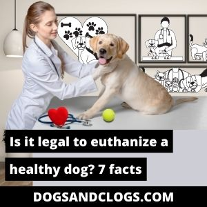 Is It Legal To Euthanize A Healthy Dog