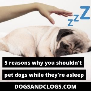 Should You Pet Your Dog While Sleeping