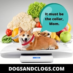 Switch Up Your Dog's Meals