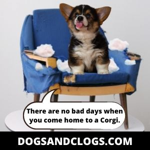There Are No Bad Days With A Corgi