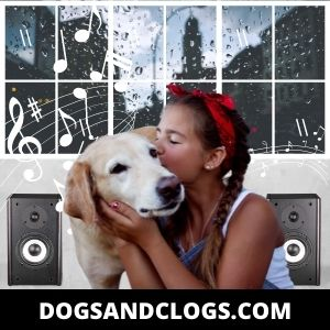 Train Your Dog To Get Used To The Noise