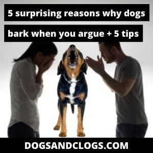 Why Do Dogs Bark When You Argue