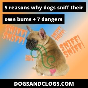 Why Do Dogs Sniff Their Own Bum