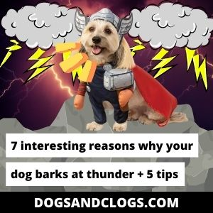 Why Does My Dog Bark At Thunder