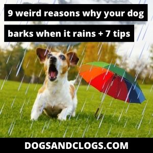 Why Does My Dog Bark When It Rains