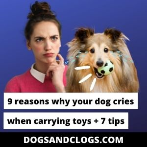 Why Does My Dog Cry When Carrying Toys
