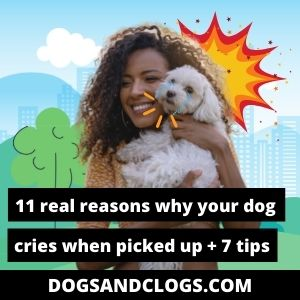 Why Does My Dog Cry When Picked Up