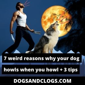 Why Does My Dog Howl When I Howl