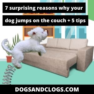 Why Does My Dog Jump On The Couch
