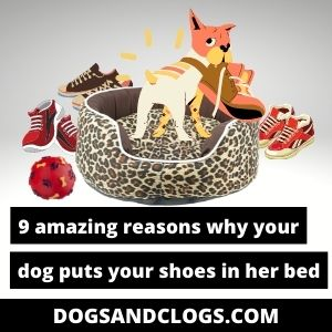 Why Does My Dog Put My Shoes In Her Bed