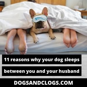 Why Does My Dog Sleep Between Me And My Husband