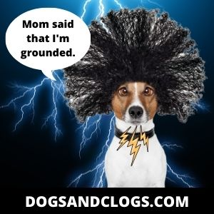 Your Dog Barks At Thunder Because Of A Sudden Zap